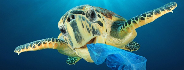 tortoise under water eating a trash bag